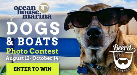 Dogs and Boats Photo Contest with Beer'd Brewing Co.